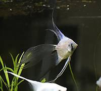 FishPixAug232013_039.JPG